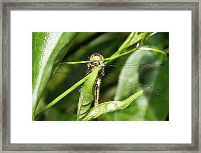Dragonfly Smiles Framed Print by Miroslava Jurcik