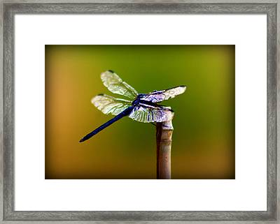 Dragonfly Framed Print by Susie Weaver