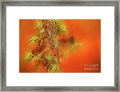 Dragonfly Framed Print by Suzanne Handel