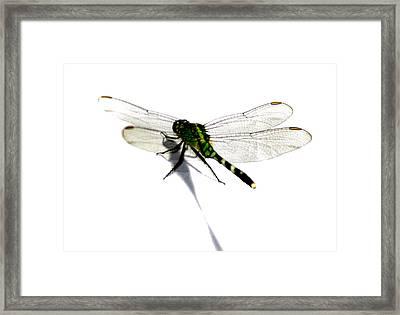 Dragonfly Framed Print by Tbone Oliver