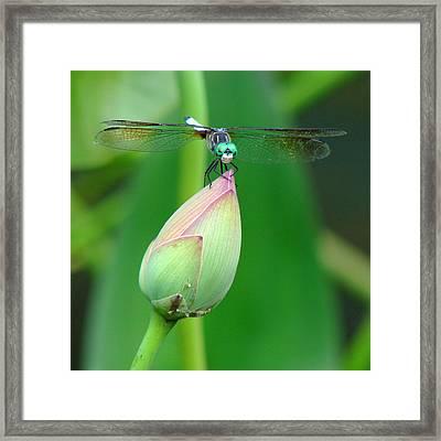 Dragonfly Va 1 Framed Print