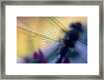 Dragonfly Wings Framed Print by Susan Leggett