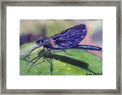 Dragonfly With Shadow Framed Print