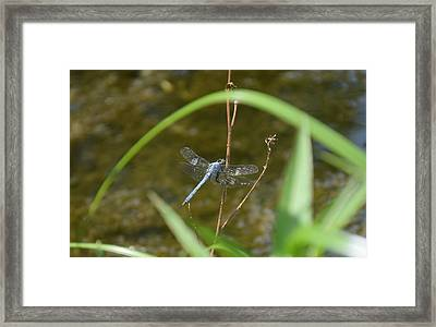 Dragonfly2 Framed Print by Bruce Miller
