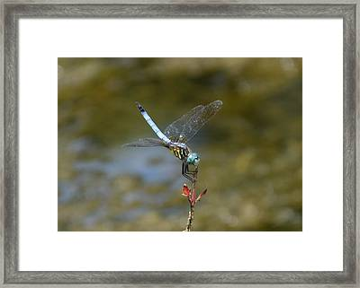 Dragonfly3 Framed Print by Bruce Miller