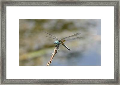 Dragonfly4 Framed Print by Bruce Miller