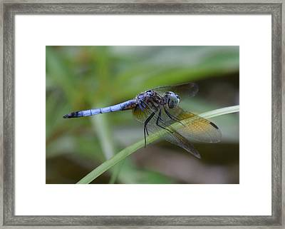 Dragonfly5 Framed Print by Bruce Miller