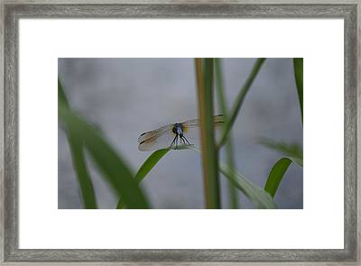 Dragonfly6 Framed Print by Bruce Miller