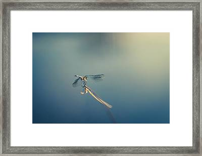 Framed Print featuring the photograph Dragonlady by Shane Holsclaw