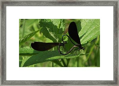 Dragons With Heart Framed Print by David and Lynn Keller