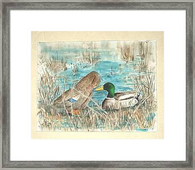 Drake And Hen Framed Print by Diane Ziemski