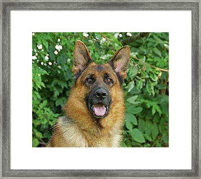Framed Print featuring the photograph Drake by Sandy Keeton