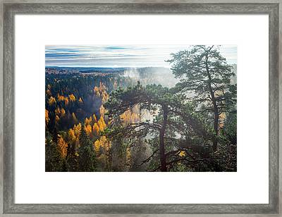 Dramatic Autumn Forest With Trees On Foreground Framed Print by Teemu Tretjakov