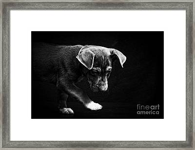 Dramatic Black And White Puppy Dog Framed Print