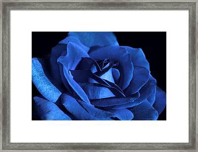 Dramatic Blue Velvet Rose Flower Framed Print by Jennie Marie Schell