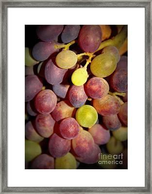 Dramatic Grapes Framed Print by Carol Groenen