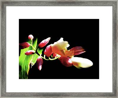 Dramatic Oriental Orchid Framed Print by Tina M Wenger