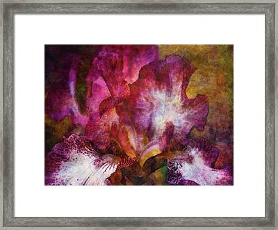 Dramatic White And Purple 0273 Idp_2 Framed Print