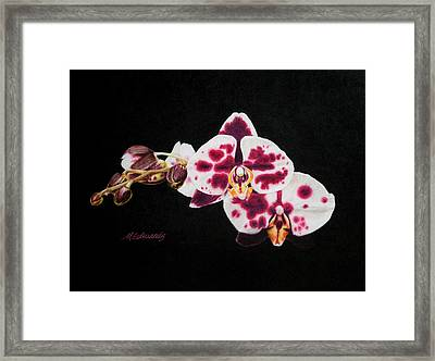 Drawing Of Polka Dot Moths Framed Print by Marna Edwards Flavell