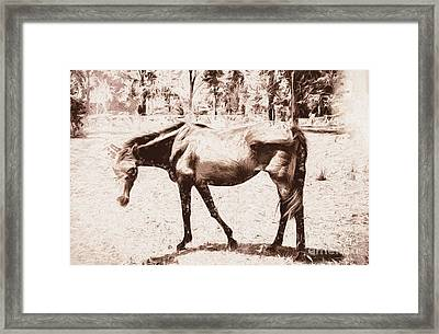 Drawn Ranch Horse Framed Print