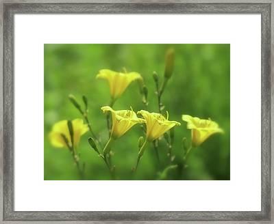 Dream A Bit - Daylilies Framed Print by MTBobbins Photography