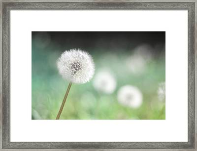 Wish Come True II Framed Print by Amy Tyler
