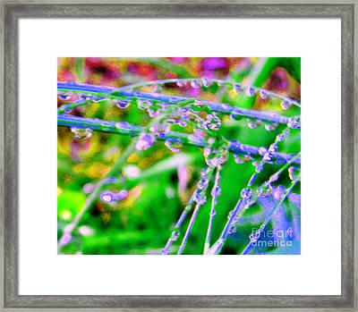 Dream Drops Framed Print by JoAnn SkyWatcher