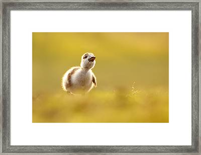 Dream Duckie _egyptian Gosling Framed Print by Roeselien Raimond