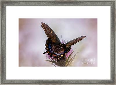 Dream Of A Butterfly Framed Print by Rima Biswas