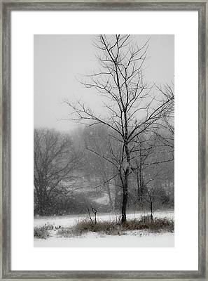 Dream Of Winter Framed Print