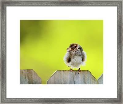 Dream Sparrow Framed Print by Betty LaRue