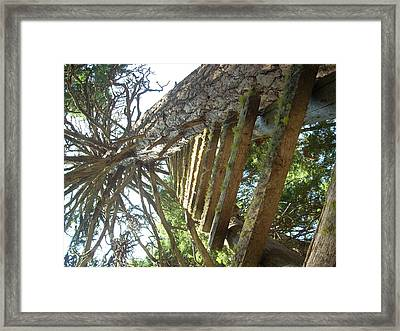 Dream Up Framed Print
