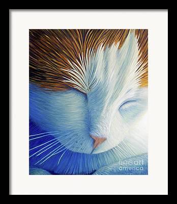 Catnap Framed Prints