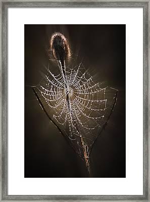 Dreamcatcher Framed Print by John Christopher