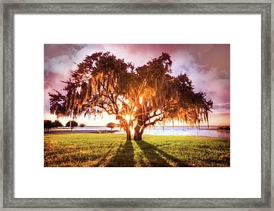Dreaming At Sunrise Framed Print