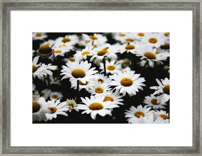 Dreaming Daisies Framed Print by George Oze