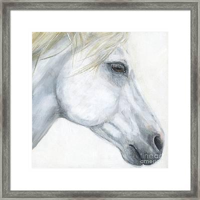 Sacred Stallion Framed Print by Brandy Woods