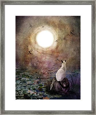 Dreaming Of A Koi Pond Framed Print