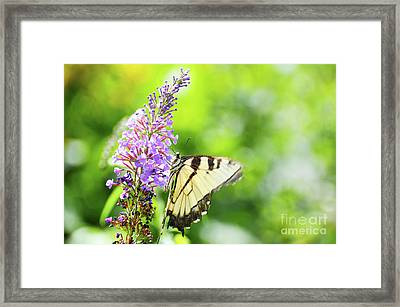 Dreaming Of A Thing Called Love Framed Print by Robyn King