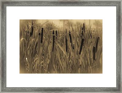 Dreaming Of Cattails Framed Print