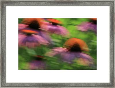 Dreaming Of Flowers Framed Print by Karol Livote