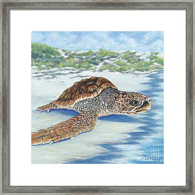 Dreaming Of Islands Framed Print by Danielle  Perry