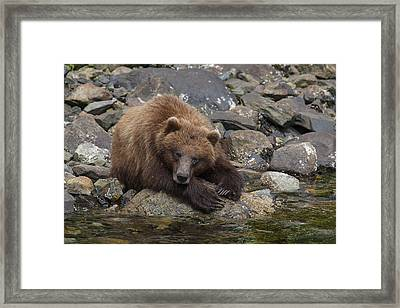 Dreaming Of Salmon Framed Print by Tim Grams
