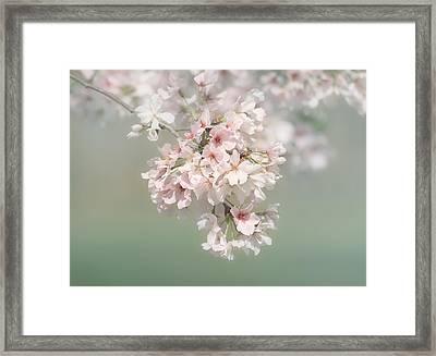 Dreaming Of Spring Framed Print by Kim Hojnacki