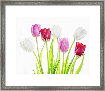 Framed Print featuring the photograph Dreaming Of Spring by Rebecca Cozart