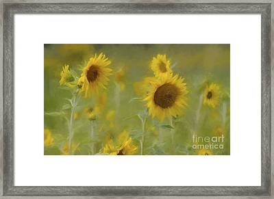 Dreaming Of Sunflowers Framed Print by Benanne Stiens