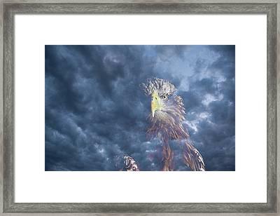 Dreaming Of The Sky Framed Print