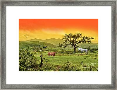Framed Print featuring the photograph Dreamland by Charuhas Images