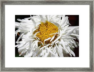 Dreams Framed Print by Carol Hicks
