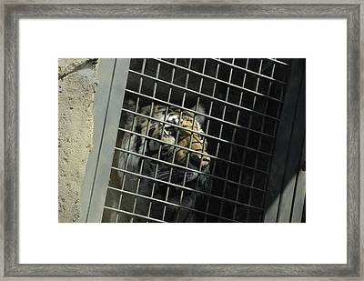 Dreams Of Home Framed Print